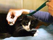 diagnosi e della cura delle malattie cardiovascolari nel cane e gatto.